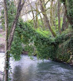 Mill Creek---Salem, Oregon  ~g