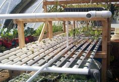 DIY Hydroponic Greenhouse
