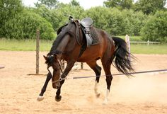 trail  Horses   10 Must Have's For Training Young Horses – The Horseaholic