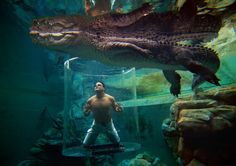 """One of the best """"swimming pools"""" in the World – Crocosaurus Cove – Darwin, Australia Darwin Australia, Marina Bay Sands, Costa Rica, Oh The Places You'll Go, Places To Travel, Places To Visit, Bali, Ubud, Mardan Palace"""