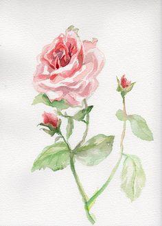 Pink Rose painting flower original by VerbruggeWatercolor