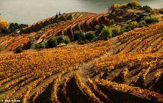 Douro River Valley © 2006-2012 Rui Pires