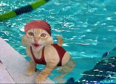 Image result for synchronized swimming cats