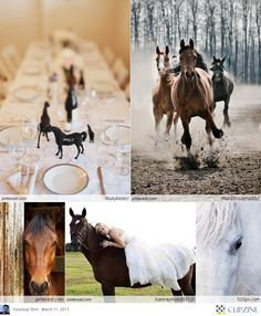 """Top right : exactly what my horses look like, (back left """"Foxxy"""" back right """"Gwen"""" front """"Starlight"""") Best horses ever! So calm + competitive!"""