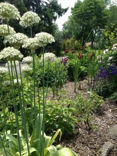 Searching For A Lot More Information On Organic Gardening? Take Into Account These Ideas! >>> To view further for this article, visit the image link. #GardeningIdeas