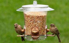 A PLACE FOR BIRD LOVERS TO PERCH: FIND THE PERFECT FEEDERS, BIRD FOOD & ACCESSORIES ON OUR NEW WEBSITE