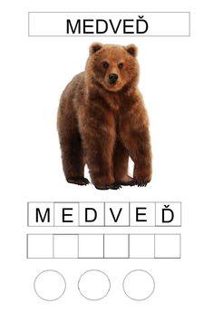 Forest Animals, Teaching English, Brown Bear, Preschool, Nursery, Classroom, Children, Animales, Autism