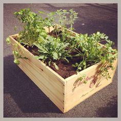 Herb garden Spring 2014