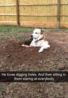 Making his own foxhole? He's got a military heart.;)