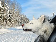 Photos Capture the Ecstatic Expressions of Dogs with Their Heads Out Car Windows