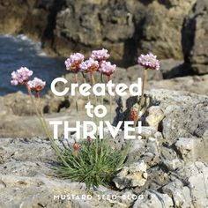 """""""I came that they may have life and have it abundantly."""" John 10:10 There's a beautiful, delicate looking flower that grows around the coastal cliffs of Britain. The colloquial name for it is Thri…"""