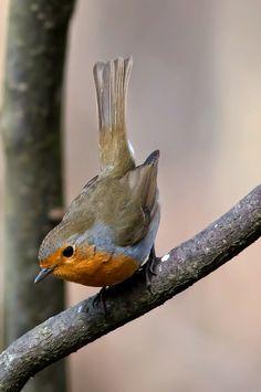 Robin - via Tommy Borglund's photo on Google+