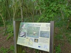 Darroch Wood, Blairgowrie