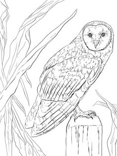 Find This Pin And More On Pajaros Y Aves Barn Owl Coloring Page
