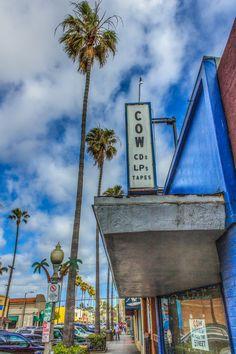 COW-- Ocean Beach, California.--Photos by David Seibold