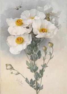 Fransız ressam Paul de Longpre - Paul de Longpre (1855-1911) LiveInternet üzerinde / Çiçek .... Tartışma - Rus Service Çevrimiçi günlüğü