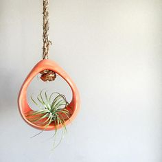A couple of these basket air plant holders will hit the shop soon!