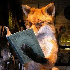 Intellectual Fox