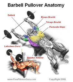 barbell pullover anatomy #musclebuilding