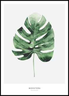 Olive Poster - Poster mit Olivenzweig in Aquarell - Posterstore.de Olive Poster - Poster mit Olivenzweig in Aquarell - Posterstore. Watercolor Flower, Watercolor Plants, Watercolor Leaves, Watercolour, Plant Painting, Plant Art, Desenio Posters, Poster Store, Free Printable Art
