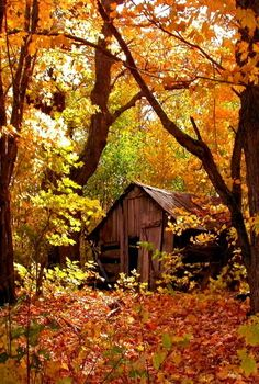 Secluded cottage in autumn forest - lovely, cabin, falling, nice, fall . Scenery Pictures, Fall Pictures, Country Barns, Old Barns, Beautiful World, Beautiful Places, Beautiful Pictures, Autumn Scenes, Autumn Forest