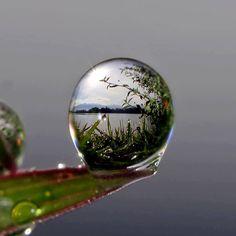 rain drop beauty