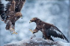 16 The Most Beautiful Wildlife Animals Photography   Funees.com
