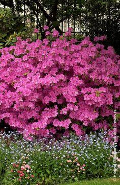 Jardin / Cour / Outside garden Garden Art, Garden Plants, Garden Design, Design Jardin, Flowers Perennials, Planting Flowers, Vegetable Garden Tips, Flowering Shrubs, Exotic Plants
