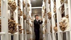 Urban mushroom growers