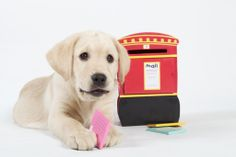 Visit our frequently asked question here http://www.dogsforthedisabled.org/what-we-do/your-questions-answered/
