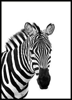 Here you will find animal posters and prints with elephants, cats, lions, butterflies and wildlife. Find your favourite animal art at Desenio! Arte Zebra, Zebra Kunst, Zebra Art, Animals Black And White, Black And White Posters, Black And White Pictures, Black White, Desenio Posters, Gold Poster