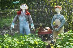 scarecrows | Scarecrows and Wagon - Stock Image