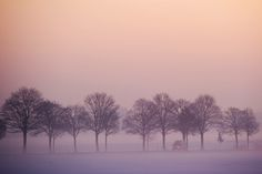 Pastel colors fill a cold winter's day in Germany (Phtoo: Sebastian Kahnert / AFP - Getty Images)