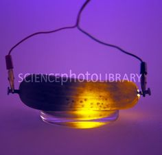 #Science #experiment to teach kids about electricity and electric currents! The electric pickle!