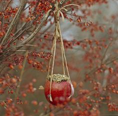 Create a Winter Bird Buffet ~ appealing apple cup