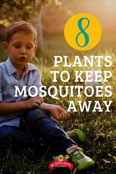 Mosquito Larvae, Natural Mosquito Repellant, Mosquito Repelling Plants, Garden Plants Vegetable, Garden Pests, Veggie Gardens, Gardening For Beginners, Gardening Tips, Play Area Garden