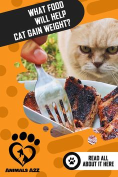You can also intersperse the diet of your cat with small amounts of supplemental canned products or canned food with high calorie and made of pure meat sources. Healthy Cat Food, Best Cat Food, Cat Diet, Cat Reading, Animal Nutrition, Cat Care Tips, Cat Health, Weight Gain