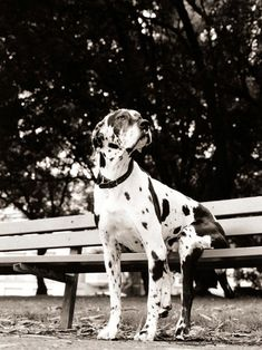 Dog on Park Bench  8 x 10 Print by MarkJAsher on Etsy, $25.00