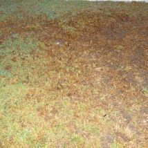 Weed weed killers and killing weeds on pinterest