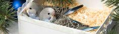 Parakeets, Cockatiel, Monk Parakeet, Bird Food, Bird Cages, Parrot, Parrot Bird, Parakeet, Bird Cage