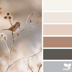 Foraged Hues ❤ liked on Polyvore featuring backgrounds
