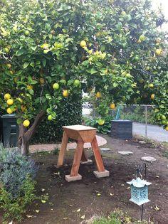 Beehive on legs, sited under lemon tree and next to blackberry hedge. Hoping for interesting honey! Fruit Plants, Fruit Trees, Gardening Gloves, Outdoor Events, For Love And Lemons, Beehive, Hedges, Beautiful Gardens, Farms