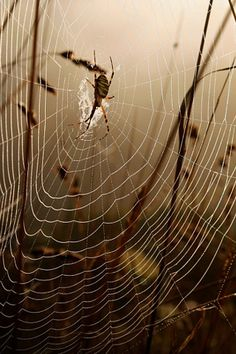 I hate spiders but they do create some awesomely beautiful webs! Galaxy S3 Wallpaper, Wallpaper Backgrounds, Iphone Wallpapers, Spider Art, Spider Webs, Bugs, Itsy Bitsy Spider, Amazing Spider, Beautiful World
