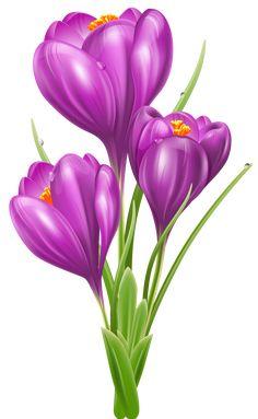 Free and public domain Crocus clip art. Flower Images, Flower Pictures, Purple Flowers, Spring Flowers, Image Transparent, Floral Rosa, Floral Drawing, Flower Clipart, Botanical Flowers