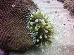 Diving, Succulents, Plants, Scuba Diving, Succulent Plants, Plant, Planting, Planets
