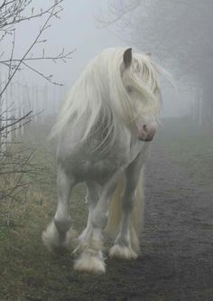 Could easily be a unicorn! They do exist!!! Lol
