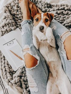 Excellent Images dogs and puppies jack russell Concepts Perform you adore your dog? Suitable pet dog health care and also teaching will assure mom Animals And Pets, Baby Animals, Cute Animals, Dogs Tumblr, Find My Pet, Cute Puppies, Cute Dogs, Photo Pour Instagram, Puppy Barking