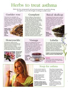 Natural Holistic Remedies Herbs to Treat Asthma.interesting - A reduced capability to deal with oxidative stress which comes from exposure to secondhand smoke as well as other environmental causes could lead to the development of asthma. Asthma Remedies, Cold Home Remedies, Asthma Symptoms, Natural Health Remedies, Herbal Remedies, Holistic Remedies, Healing Herbs, Medicinal Herbs, Medicinal Plants