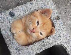 こっそり遊んでいるところを見つかったので、急いでブロックの隙間に隠れる猫ちゃん