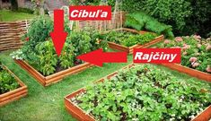 Plants, Gardening, Lawn And Garden, Plant, Planting, Yard Landscaping, Planets, Horticulture